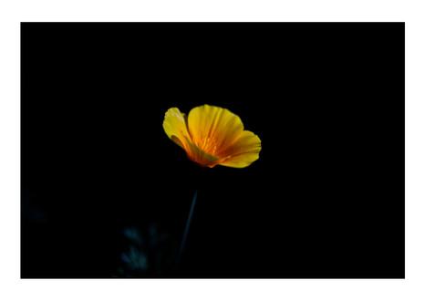 Yellow Flower.jpg