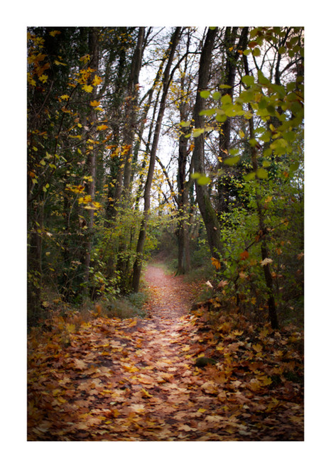 Secret Trail.jpg
