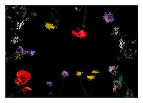 Wildflowers #1.jpg