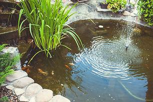 Backyard пруд
