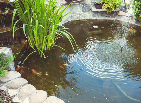 4 Easy Steps to Create A Water Garden