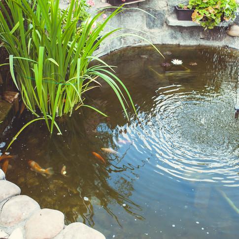 Lago de peixes e plantas aquáticas