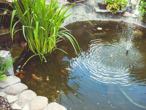Creating the Perfect Backyard Pond