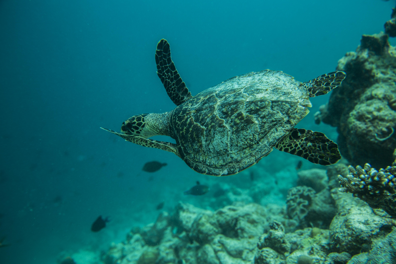 Lacabana Maldives  A DhMaamigili Island Snorkling (9)