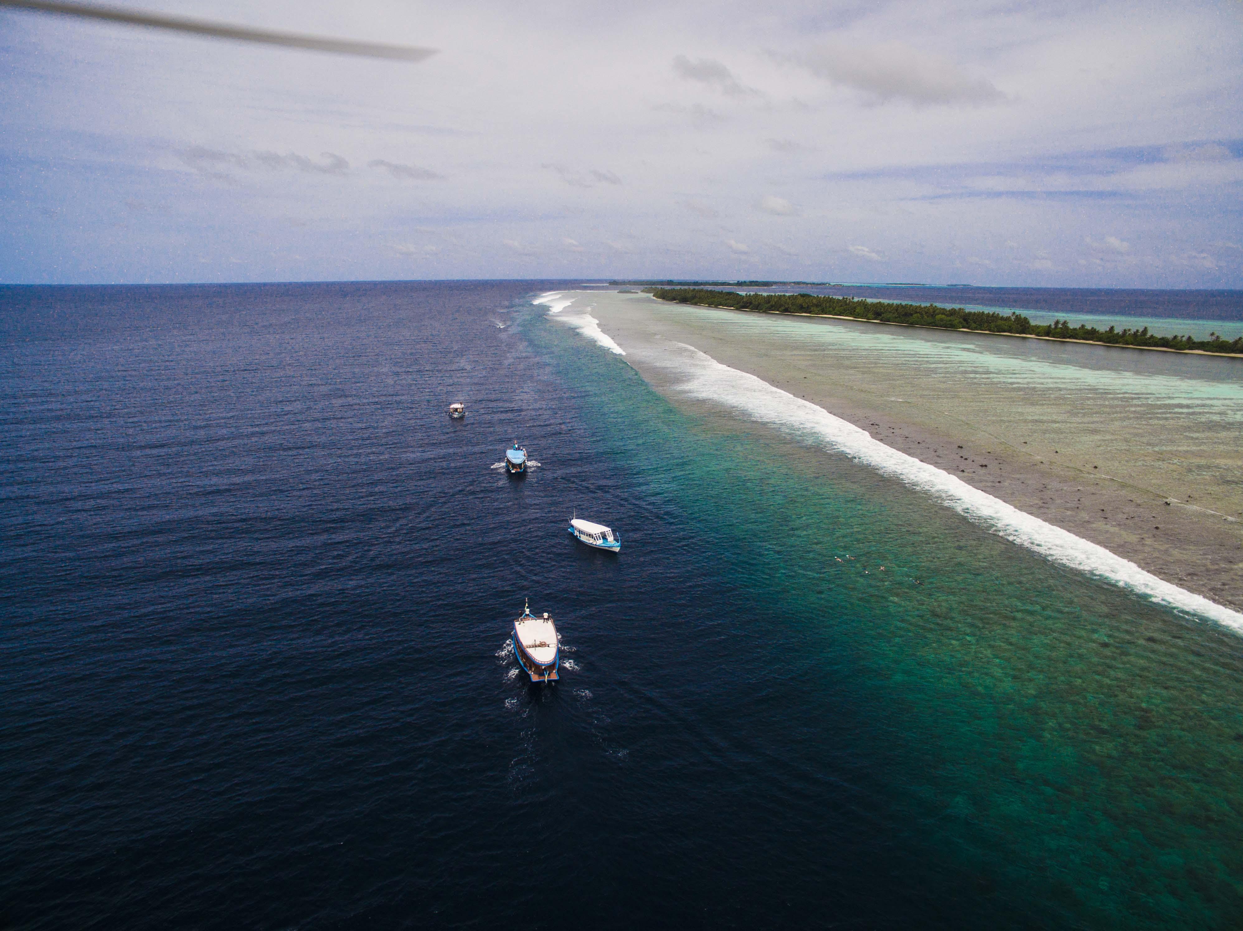 Lacabana Maldives  A DhMaamigili Island Whale Shark (7)