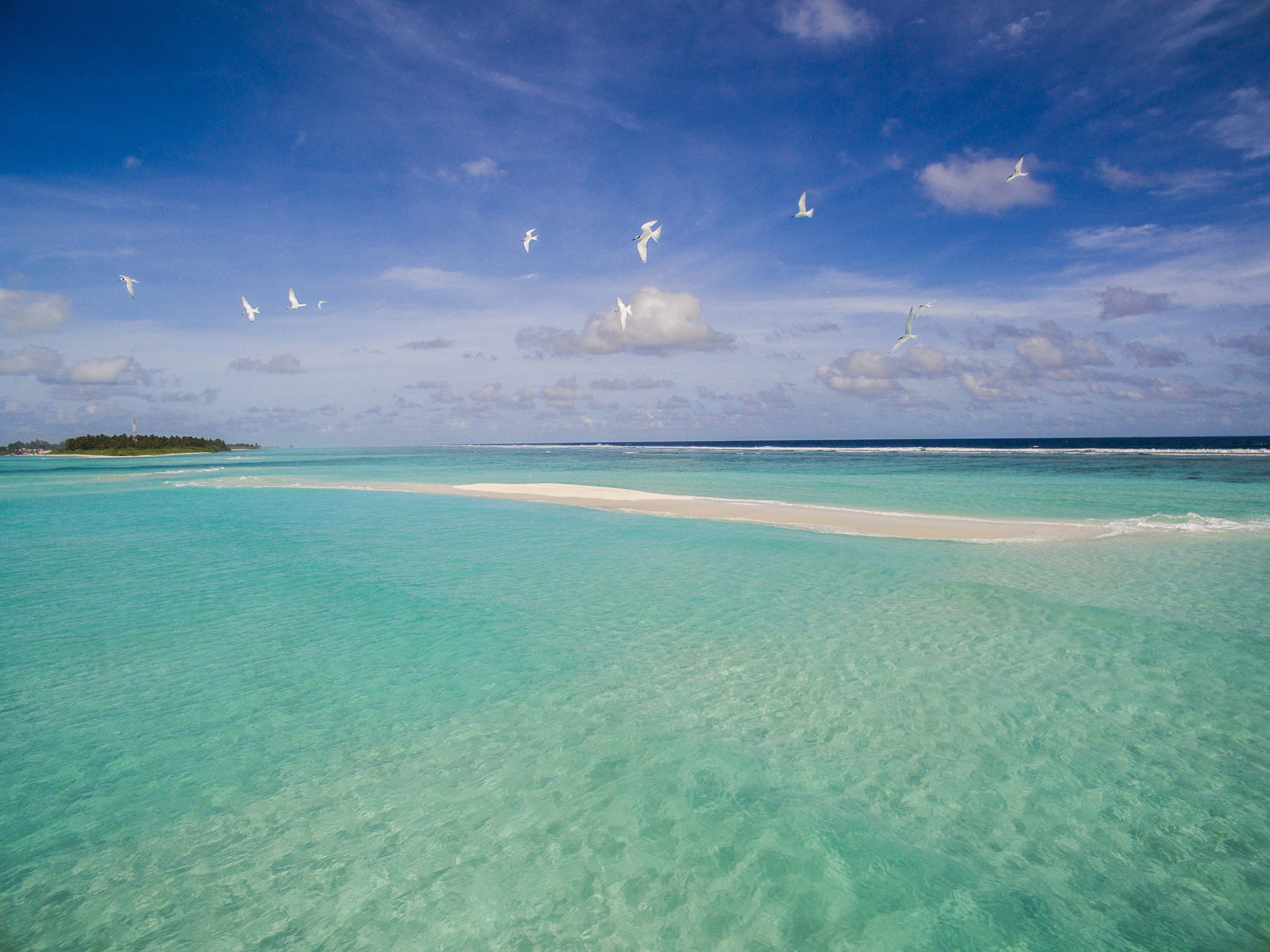 Lacabana Maldives Sand Bank (2)