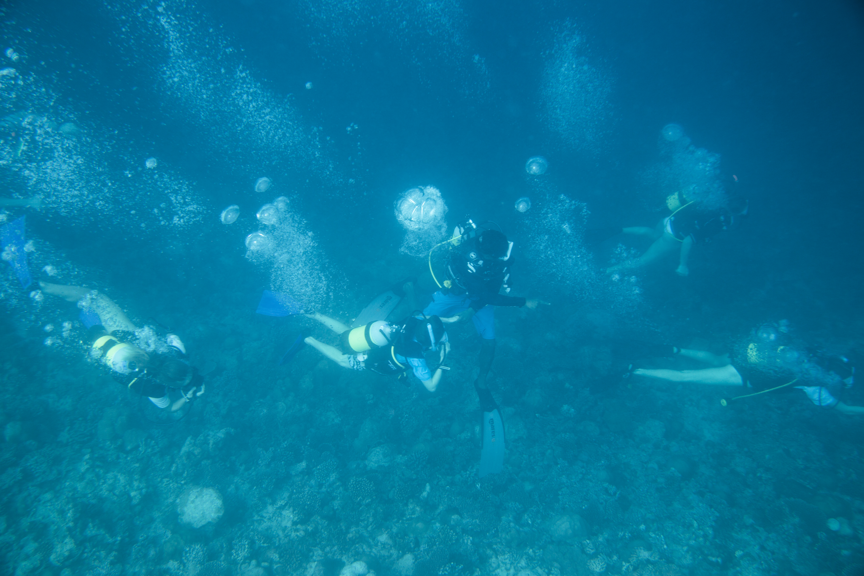 Lacabana Maldives  A DhMaamigili Island Diving (4)
