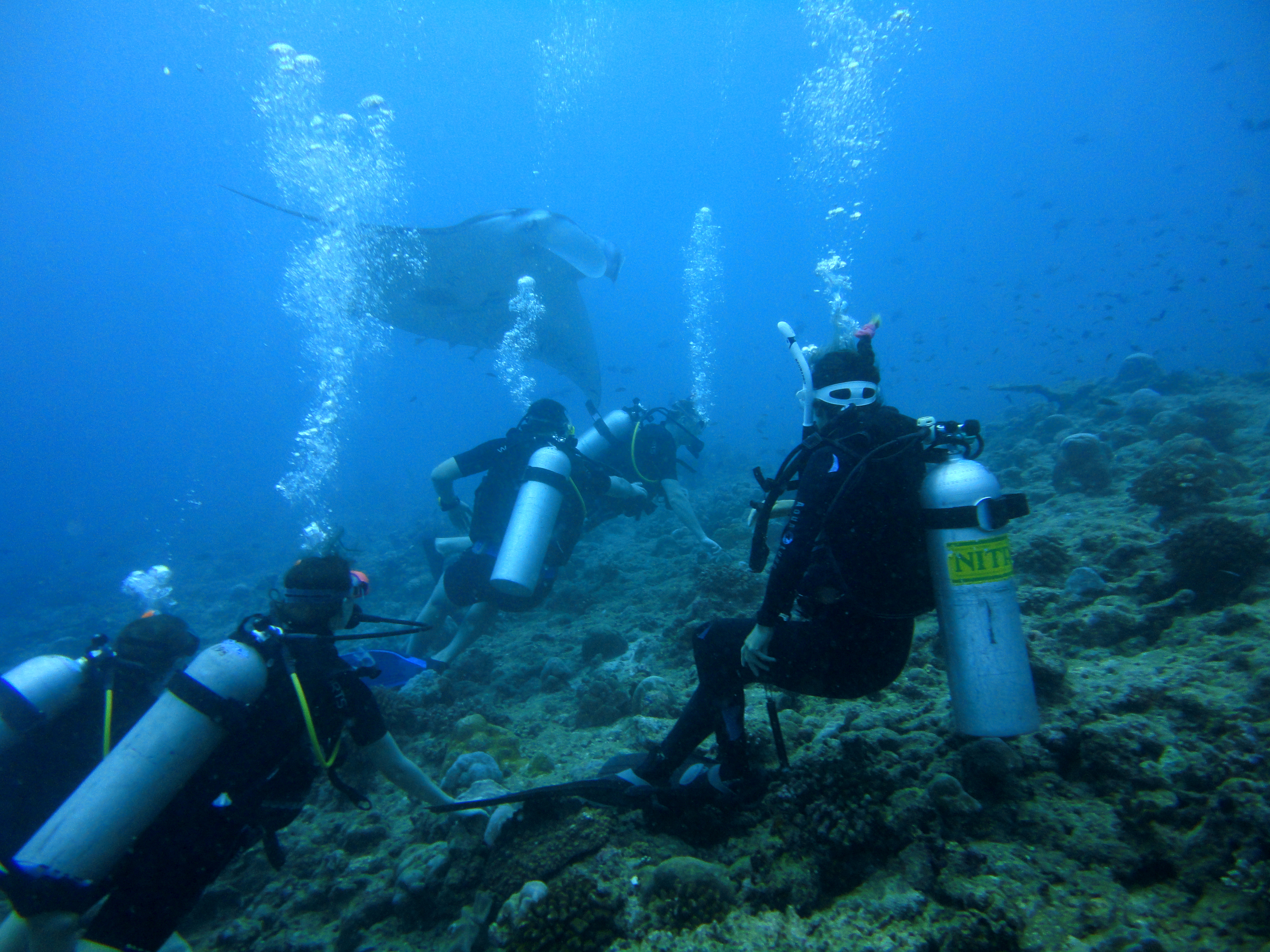 Lacabana Maldives  A DhMaamigili Island Diving (8)
