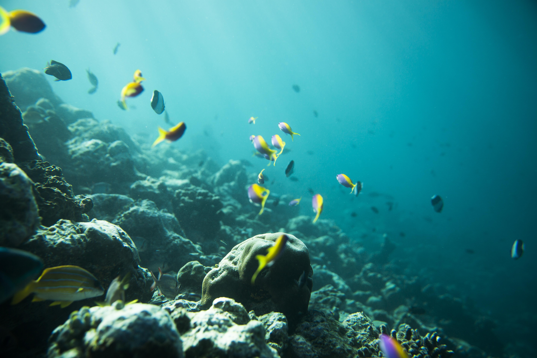 Lacabana Maldives  A DhMaamigili Island Snorkling (7)
