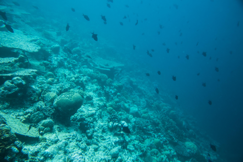 Lacabana Maldives  A DhMaamigili Island Snorkling (4)