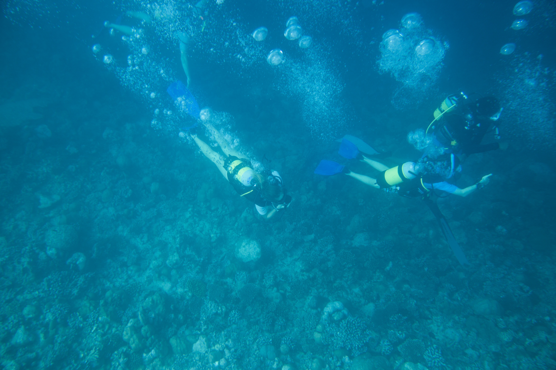 Lacabana Maldives  A DhMaamigili Island Diving (6)