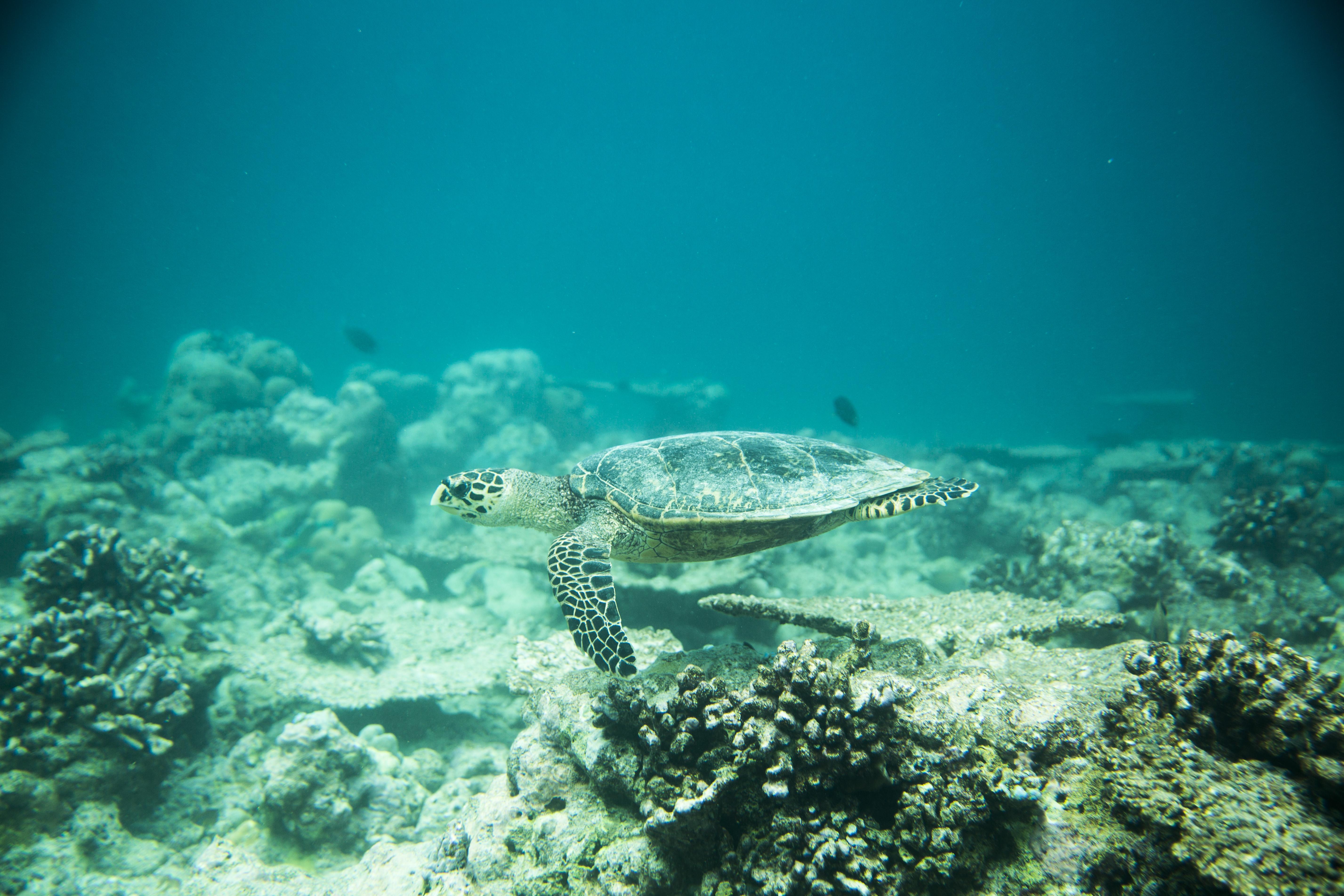 Lacabana Maldives  A DhMaamigili Island Snorkling (5)