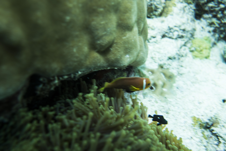 Lacabana Maldives  A DhMaamigili Island Snorkling (11)