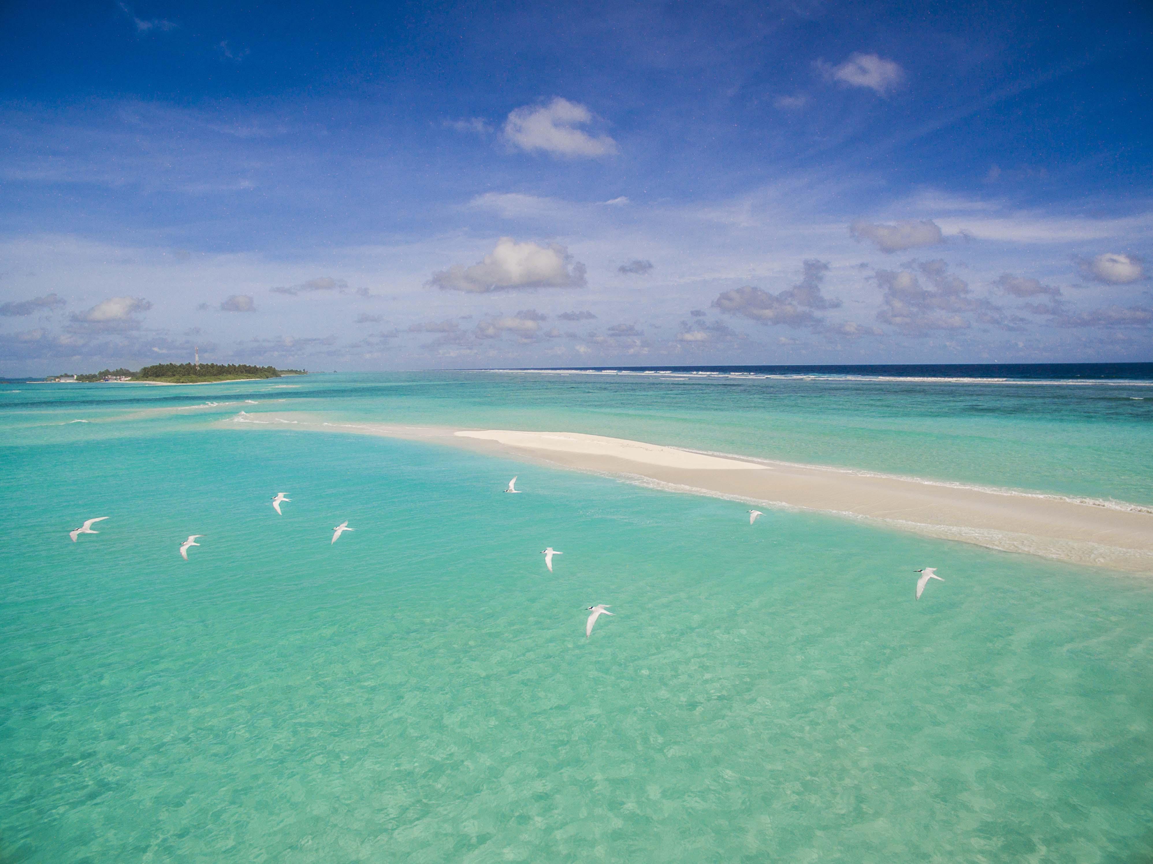 Lacabana Maldives Sand Bank (3)