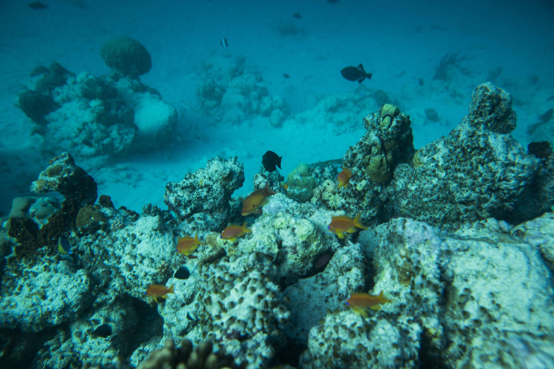 Lacabana Maldives  A DhMaamigili Island Snorkling (2)