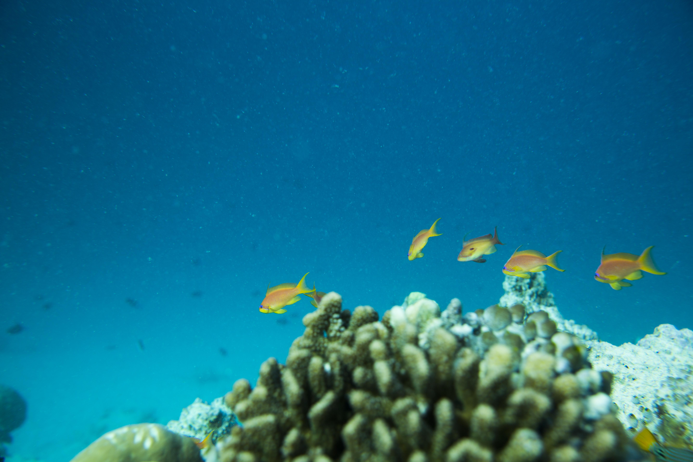 Lacabana Maldives  A DhMaamigili Island Snorkling (1)