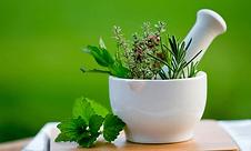 Botanical-Medicine.png