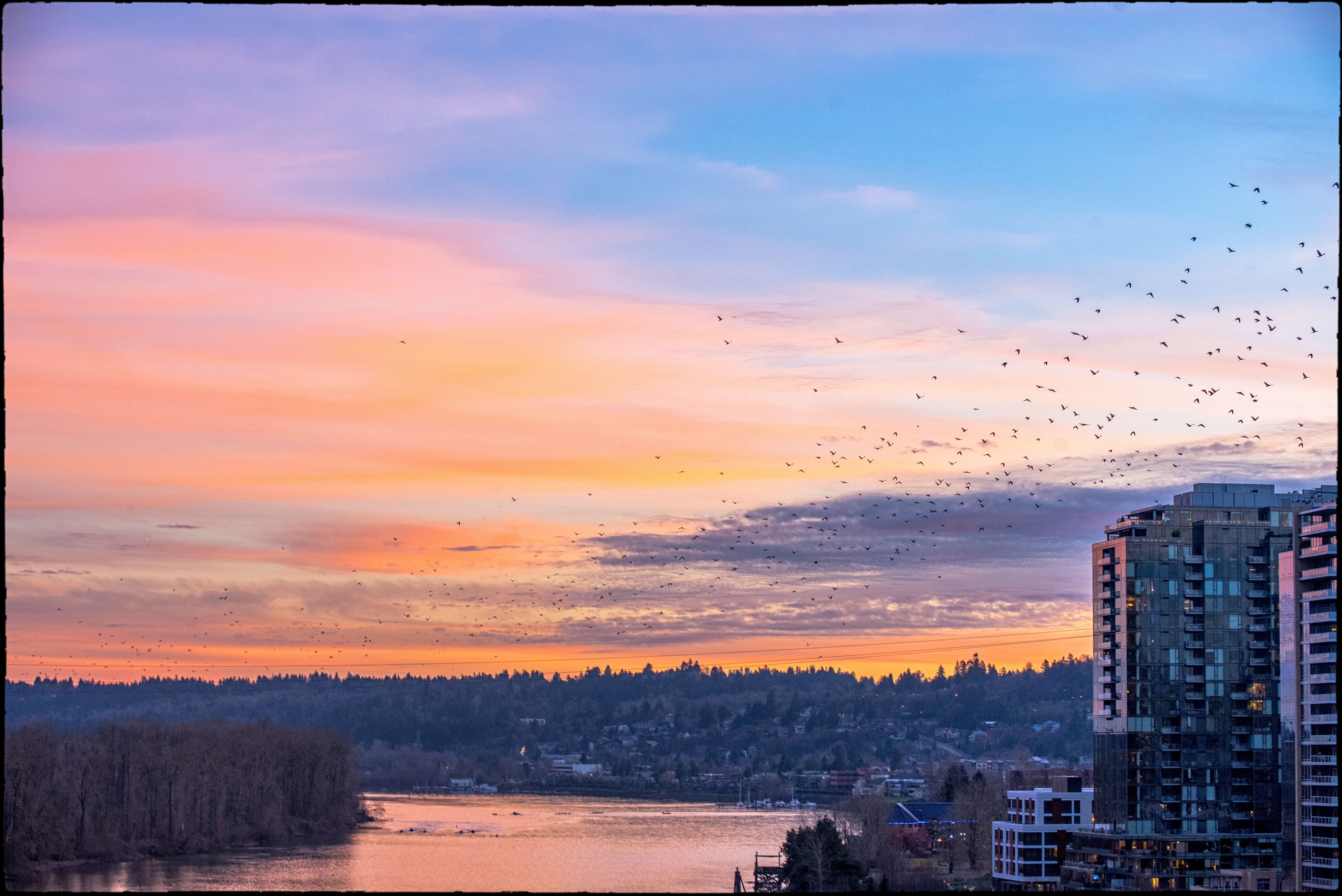 South Waterfront susnets and birds (1 of 1)
