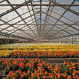 greenhouse-4948726_1920.jpg