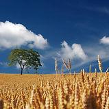 field-192179_1280.jpg