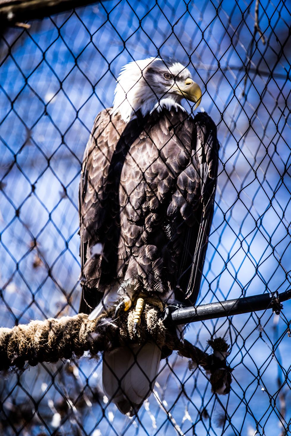 The Eagle-1.jpg