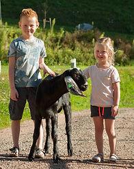 Kinder Ziegen Wandertour