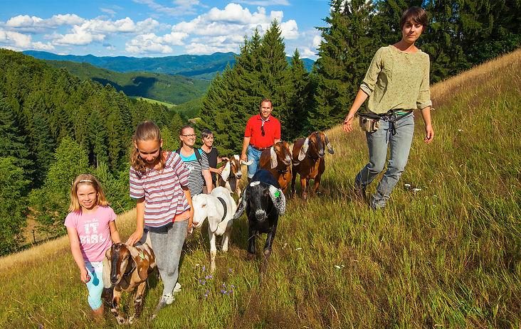 Wanderung mit Ziegen nahe Freiburg