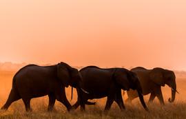 Savute, Botswana