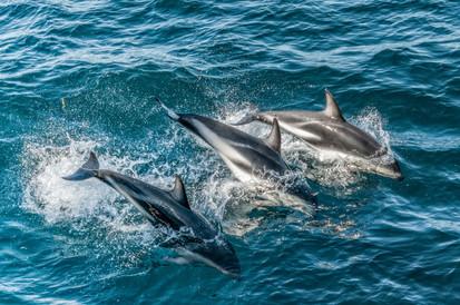Dolphins, Antarctica