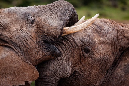 Addo, South Africa