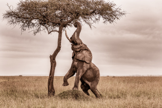 Masaai Mara, Kenya