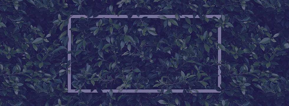 Walled garden banner.jpg