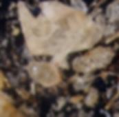 Schermafbeelding 2019-01-23 om 16.28.53.