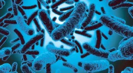probiotica.png