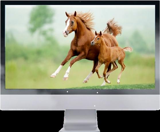 Verzorging van paard.png