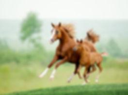 verzorging paard met veulen