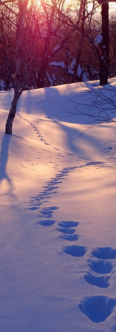 Foot Prints In Snow