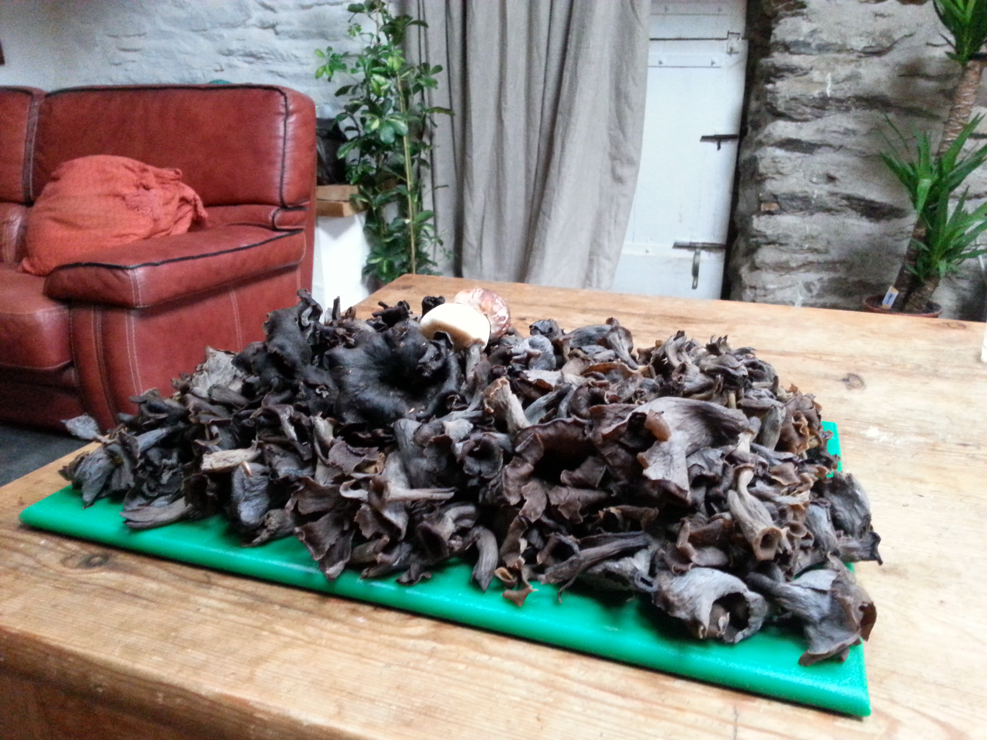 black trumpets fresh from the forest