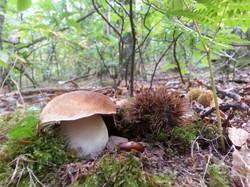 autumn 2015 at Love la Forêt