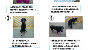 犬用靴トレーニング