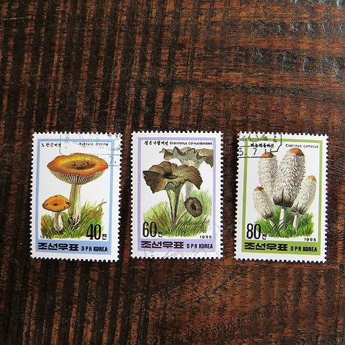 Mushrooms 1995