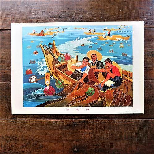 Poster China Original Kelp Harvesting At Sea 1975