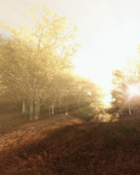 Morning Light_