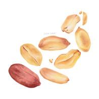 Lorin_Cinar_Watercolour_Peanut_Composition.jpg