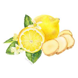 Lorin_Cinar_Lemon_and_Ginger_Illustration_V1__02_Instagram.jpg