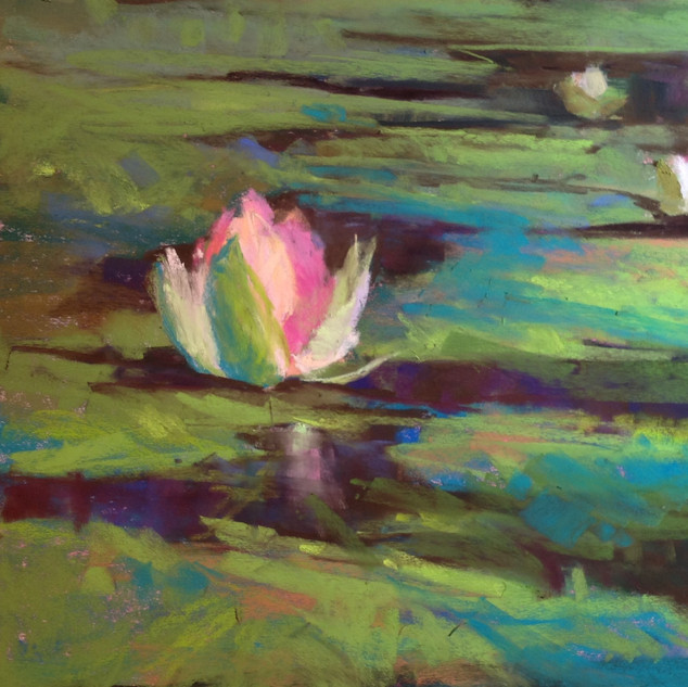 Water Lily, Pastel (10x10)