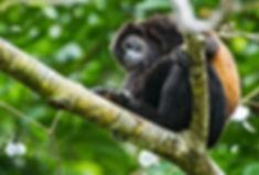monkey5-1.jpg