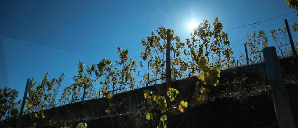 Quinta das Lamelas - Douro