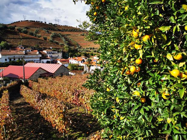 Quinta das Lamelas - Casa das Laranjeiras