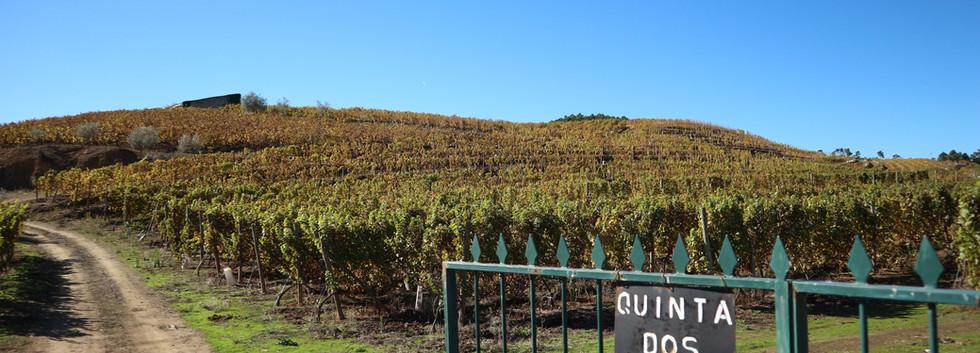 Quinta das Lamelas - marecos - Douro